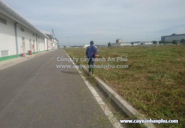 Dịch vụ cắt cỏ giá rẻ Bình Dương