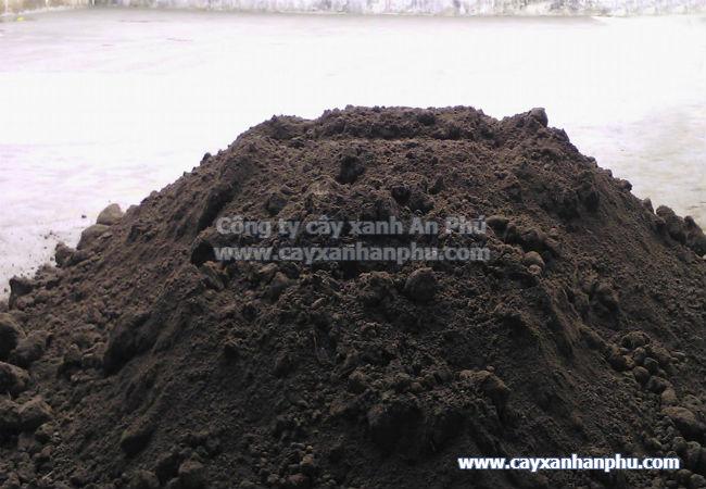 đất thịt trồng cây