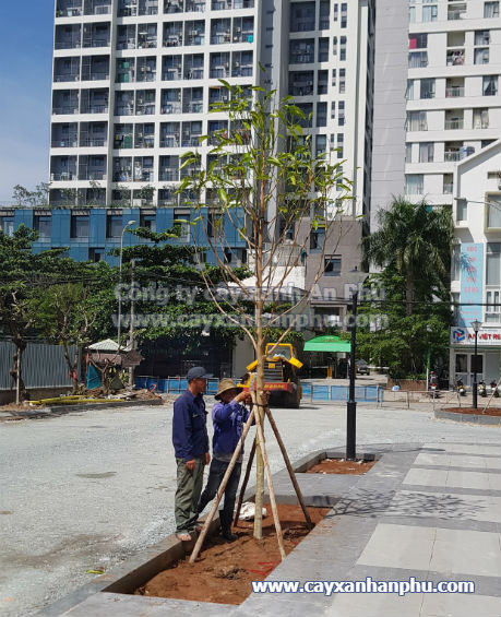 Trồng cây cho khu dân cư