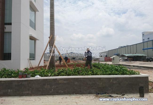 Cung cấp và trồng cây cảnh cho nhà máy Intimex 12