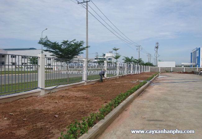 Cung cấp và trồng cây cảnh cho nhà máy Intimex 7