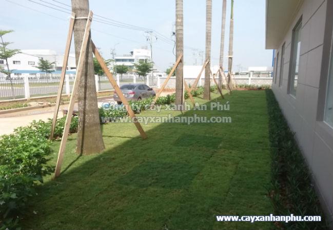Cung cấp và trồng cây cảnh cho nhà máy Intimex 15