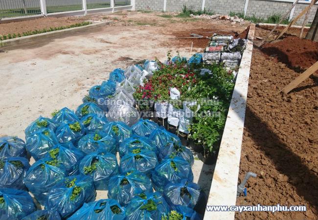 Cung cấp và trồng cây cảnh cho nhà máy Intimex 8