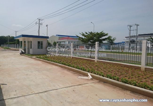 Cung cấp và trồng cây cảnh cho nhà máy Intimex 14