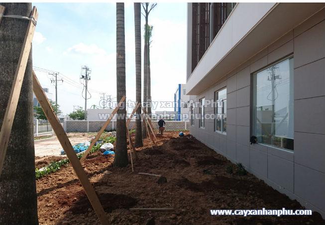 Cung cấp và trồng cây cảnh cho nhà máy Intimex 3