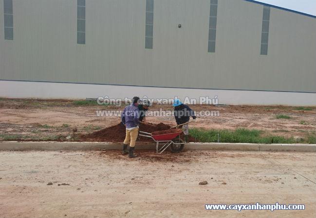 Cung cấp và trồng cây cảnh cho nhà máy Intimex 5