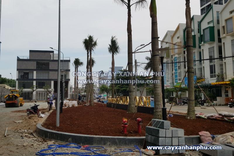 Trồng cây cho chung cư tại quận 2