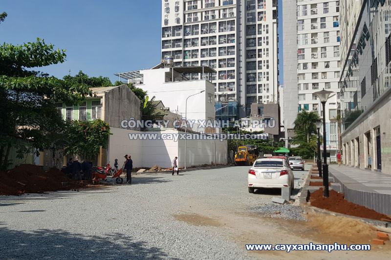 Trồng cây dự án tại quận 2