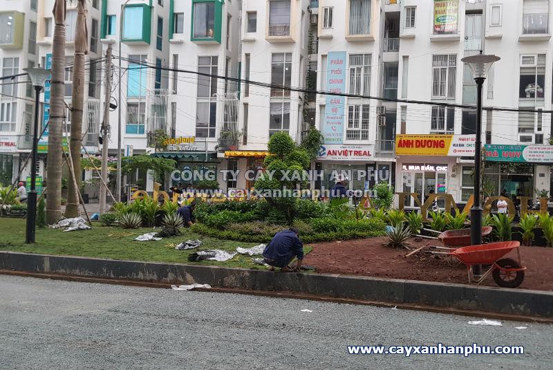 trồng cây cảnh cho dự án