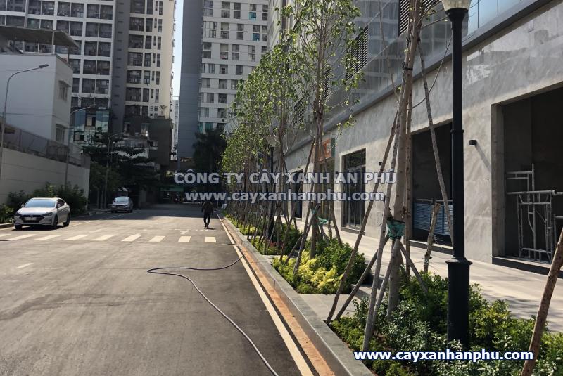 Trồng cây xanh cho công trình