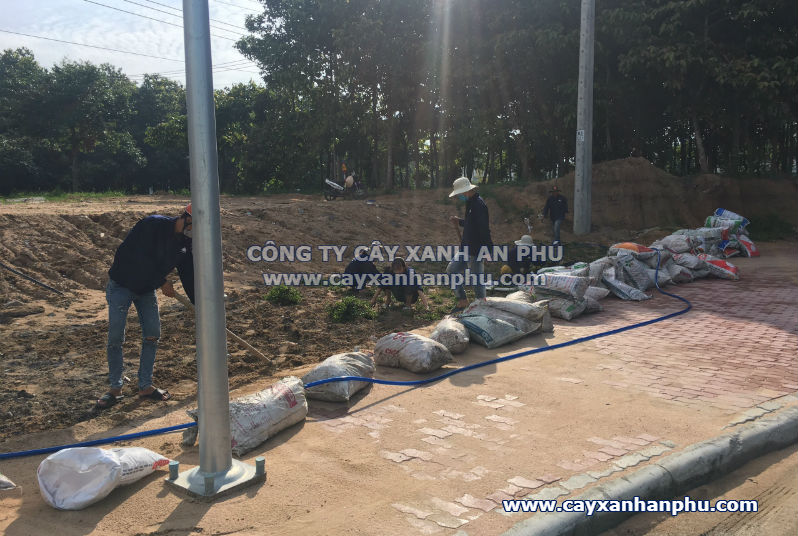 Trong co la gung tai Binh Duong