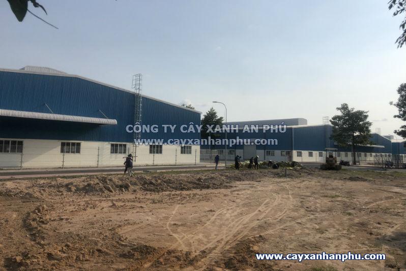 Trong co tai Binh Duong