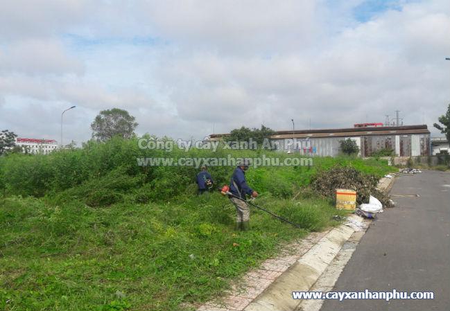 Dịch vụ cắt cỏ Bình Định