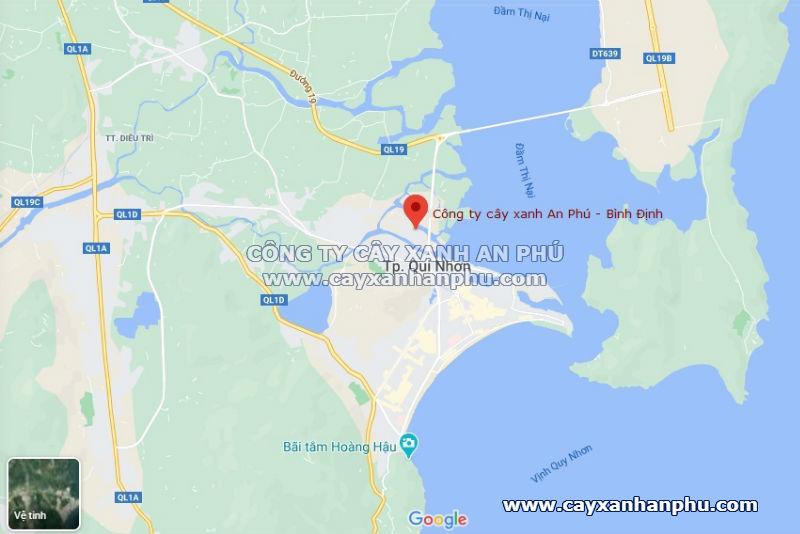 Văn phòng Công ty cây xanh An Phú tại Bình Định